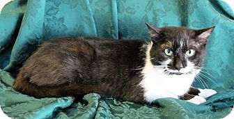 Domestic Shorthair Cat for adoption in Greensboro, North Carolina - Tyler