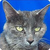 Adopt A Pet :: Amber - Sherwood, OR