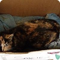 Adopt A Pet :: Garrie - Berlin, CT