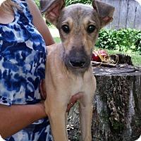 Adopt A Pet :: Keno - Medora, IN