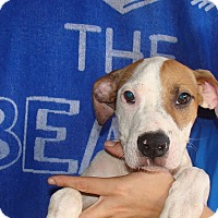 Adopt A Pet :: Ranger - Oviedo, FL