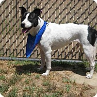 Adopt A Pet :: *DOTTY - Norco, CA