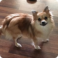 Adopt A Pet :: Lady - Wilmington, DE