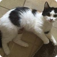Adopt A Pet :: Annie - McHenry, IL