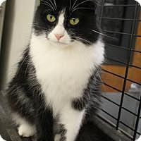 Adopt A Pet :: Olive - Yukon, OK