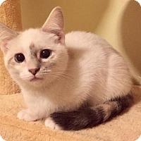 Adopt A Pet :: Loretta Lynn - Hockessin, DE