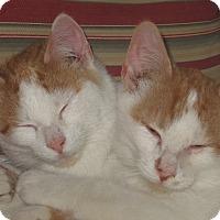 Adopt A Pet :: 2 Amigos - Newtown, CT