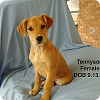 Adopt A Pet :: Tennyson meet me 1/6 - Manchester, CT