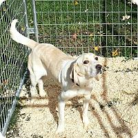 Adopt A Pet :: Peggy - Cleveland, OH