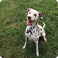 Adopt A Pet :: Annie - Akron, OH