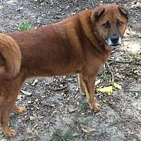 Adopt A Pet :: Mongoose - Newport, VT