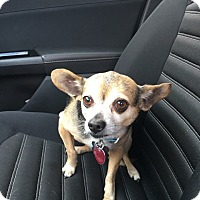 Adopt A Pet :: BUDDY - Sonora, CA
