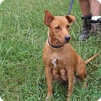 Adopt A Pet :: Roo - Gaffney, SC