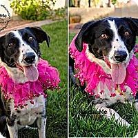 Adopt A Pet :: Jinx - Tempe, AZ