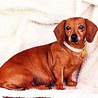 Adopt A Pet :: Clara - San Jose, CA