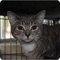 Adopt A Pet :: Sylvia - Monroe, GA