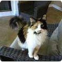 Adopt A Pet :: Dalilah - Jacksonville, FL
