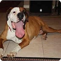 Adopt A Pet :: Beef - Brunswick, GA