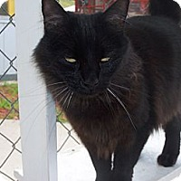 Adopt A Pet :: marceline - El Cajon, CA