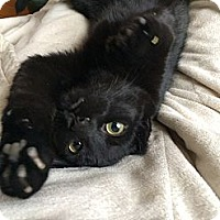 Adopt A Pet :: Hartford - St. Louis, MO