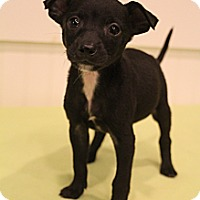 Adopt A Pet :: Paco - Bedminster, NJ