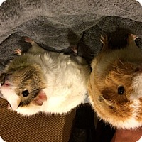 Adopt A Pet :: Pochi and Pokey - Fullerton, CA