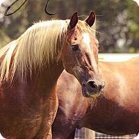 Adopt A Pet :: Beau - Cantonment, FL