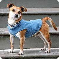 Adopt A Pet :: Oliver - Salem, OR