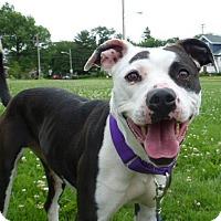 Adopt A Pet :: Nicole - Oberlin, OH