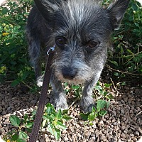 Adopt A Pet :: Herakles - Las Vegas, NV