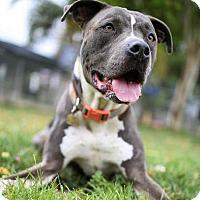 Adopt A Pet :: Titan - Ventura, CA