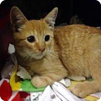 Adopt A Pet :: Tyson - East Brunswick, NJ