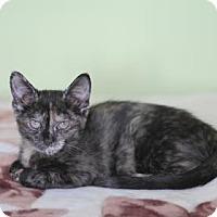 Adopt A Pet :: Kanika - New York, NY