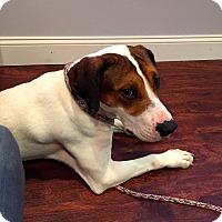 Adopt A Pet :: Baby Nubs: Norwood - Cincinnati, OH
