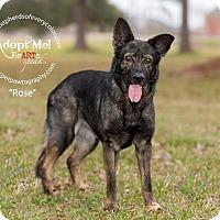 Adopt A Pet :: Rose - Montgomery, AL