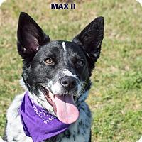 Adopt A Pet :: Max II - Patterson, CA
