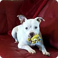 Adopt A Pet :: Isabelle - Lawrenceville, GA