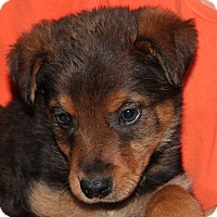Adopt A Pet :: Dale Evans - Harmony, Glocester, RI
