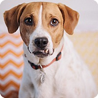 Adopt A Pet :: Jericho - Portland, OR