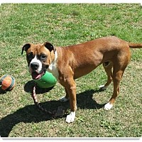 Adopt A Pet :: Cooper - Brentwood, TN