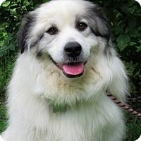 Adopt A Pet :: Diamond - Kyle, TX