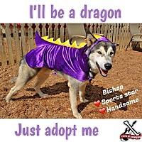 Adopt A Pet :: Bishop - North Haledon, NJ