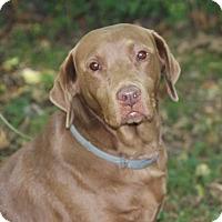 Adopt A Pet :: Roxy - Centerville, TN