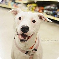 Adopt A Pet :: Lulu - Salt Lake City, UT