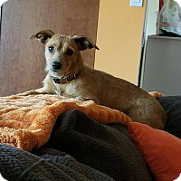 Terrier (Unknown Type, Medium) Mix Dog for adoption in waterbury, Connecticut - Eden