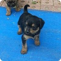 Adopt A Pet :: Tina - Englewood, CO