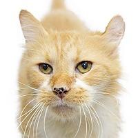 Adopt A Pet :: Monty - Adrian, MI