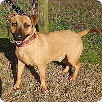 Adopt A Pet :: Chico - Newport, NC
