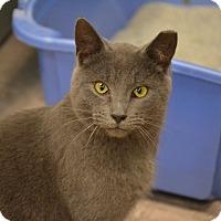 Adopt A Pet :: Foster - Byron Center, MI