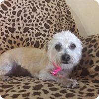 Adopt A Pet :: Bitsie - Las Vegas, NV